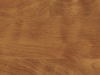 WP513-Golden Teak.png